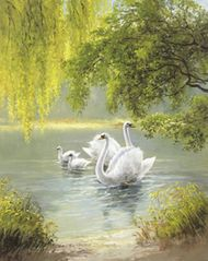 Swan Family I