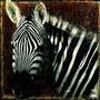Portret zebry