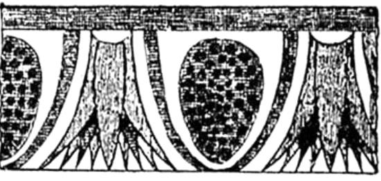 żłobienie o kształcie kwiatu lotosu i jajownika (wole oczy)