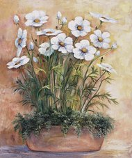 White anemones in bowl