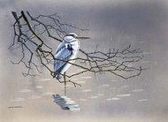 Ptak w deszczu