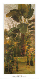 The Tropical House, Kew Gardens