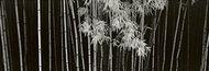 Bambus - Chiny