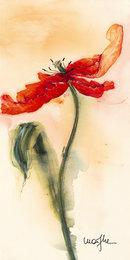 Tulipan II