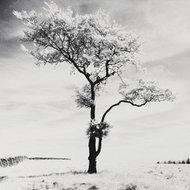 Samotne drzewo # 3, Park Narodowy Peak District, Anglia