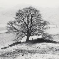 Tajemnicze drzewo,Park Narodowy  Peak District,  Anglia
