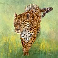 Jaguar Kalina