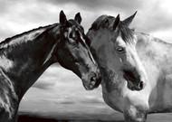 Portret koni