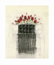 Black And White/Roses-Boxed