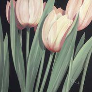 Harmonia tulipanów II