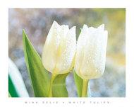Białe tulipany I