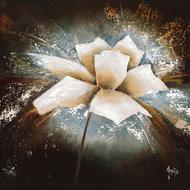 Fleur d´étoile I
