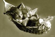 Kocięta w hamaku