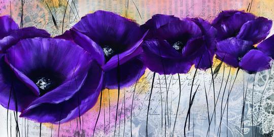 Pavot violet I