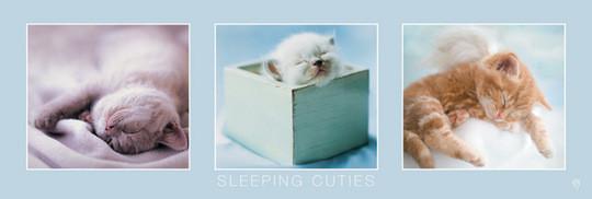 Śpiące kocięta